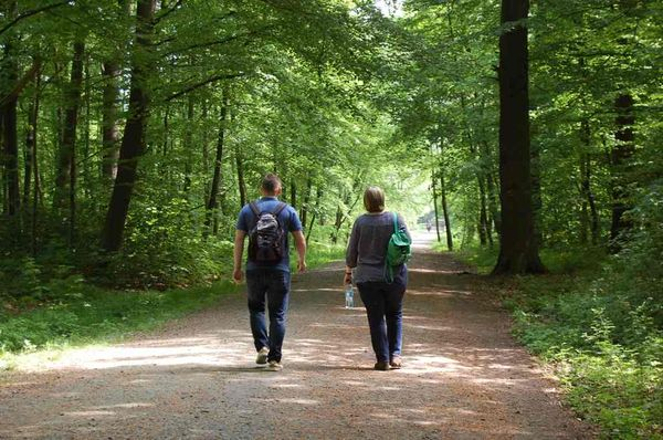 wandern Wald