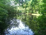 Ihlow Wald
