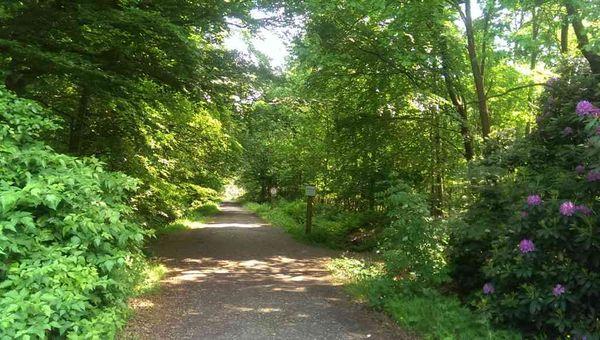 Waldexkursion Ihlower Forst