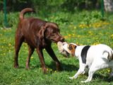 Hunde Urlaub in Ihlow
